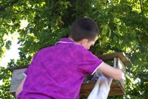 Uilen beheer en nestkasten