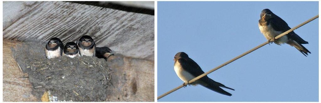 ErvenPlus zal biodiversiteit in Deurne verhogen