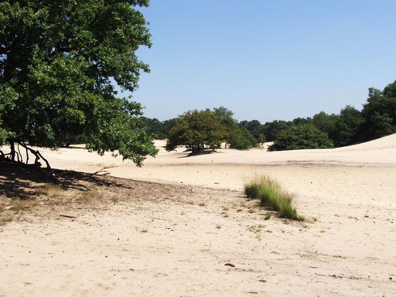 Drunense duinen